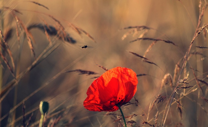 Aşk yoluna düşen kişi varlıktan geçmiştir