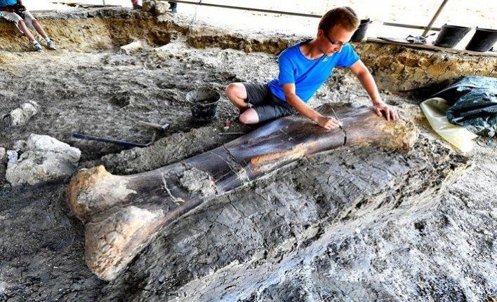 140 milyon yıllık dinozor kemiği bulundu
