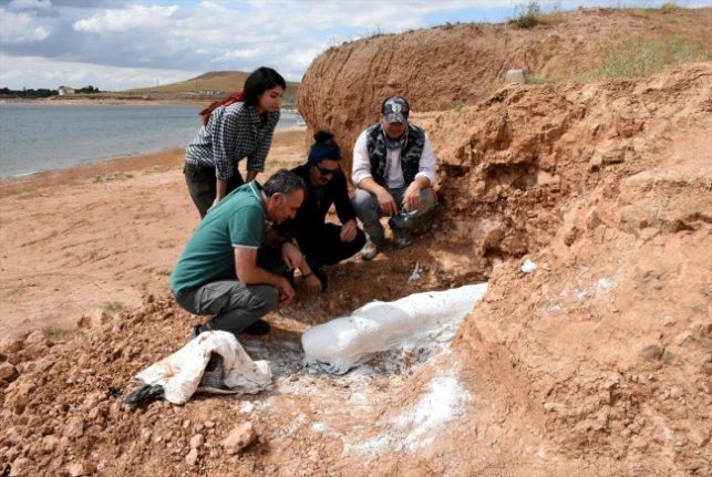 Kurutlu'da 2 bine yakın hayvan fosili bulundu