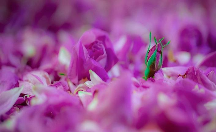 Rıza makamına güller deren derviş