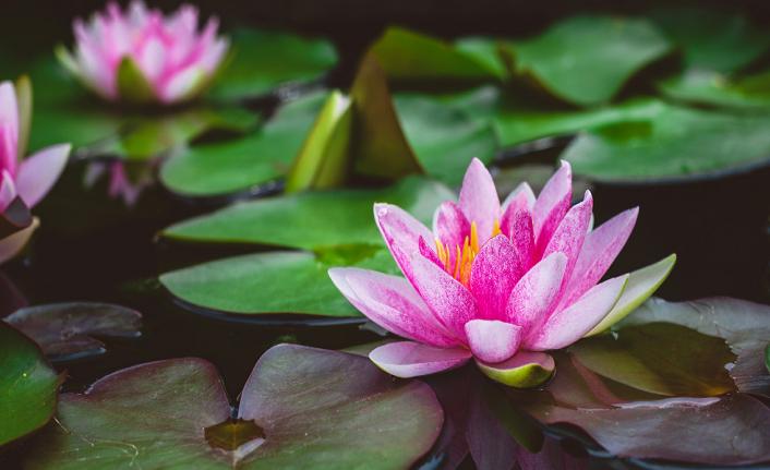 Gönül diline tercüman: Çiçekler