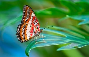 Hayretini uykudan uyandır, bir kelebeğin ardına düş