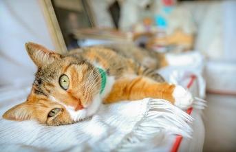 Lale Müldür: Şair ve kediler arasındaki bağ, güzellik ve aşkın bir olduğu bir haldir