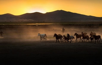 'Yelelerinde muradımın asılı gittiği atlar şimdi neredeler?'