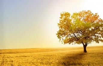 Tuba ağacı gibi yersiz yurtsuz ve tepetaklak duranların öyküsü
