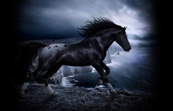 Bir at kendini en fazla ne kadar saklayabilirdi?