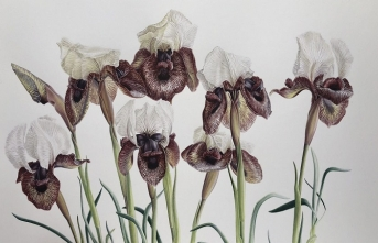 Bilimsel bitki ressamlığı tarihi ve önemi