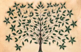 Hayat ağacı kaderi belirleyen sınav