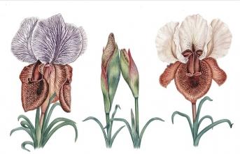 Türk bitki ressamlarının imza attığı projeler