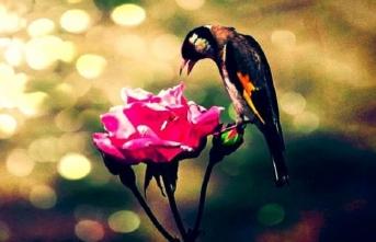 Soran âşık, cevap veren mâşuk