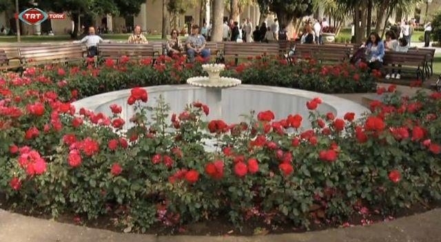 Topkapı Sarayı'na okka gülleri dikildi (video)