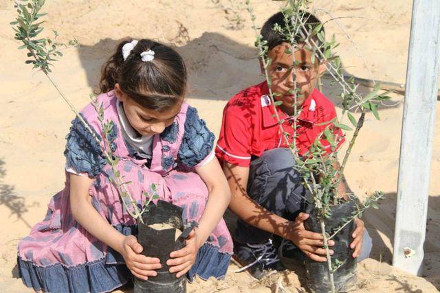 Bir zeytin ağacı bir ailenin hayatını nasıl değiştirir?