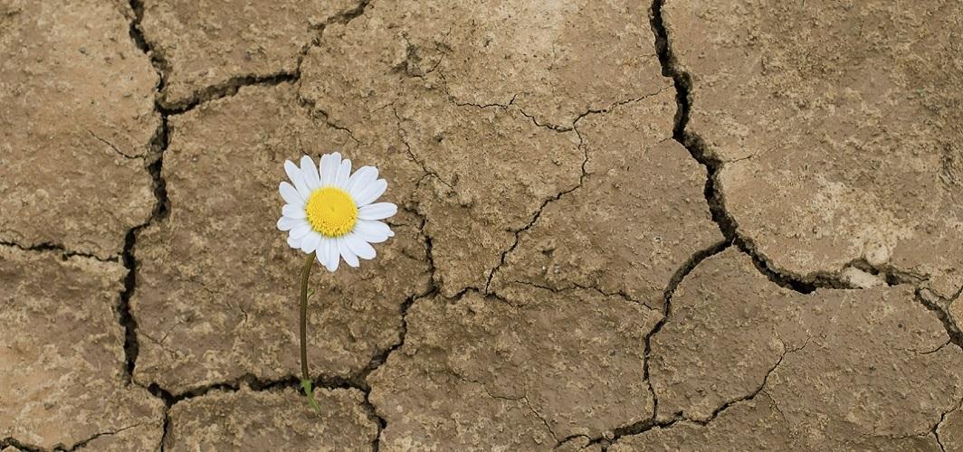 İnsanlık tarihi kadar gerilere giden bir tartışma: Haz mı, yaşam mı?