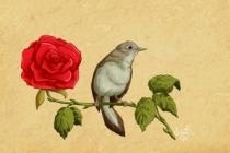 Divan şiirini sevmek