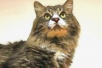 Doğulunun kedi sevgisi nereden geliyormuş?
