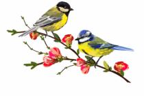 Kuşları uğurlamak da bir sanattır