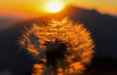 Hikmeti kavramak için bir fırsat: Perde ve Mânâ