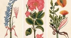 Divan şiirinde çiçekler bize ne söyler?