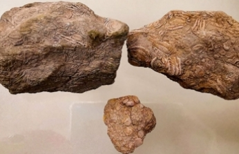 50 milyon yıllık fosil Diyarbakır'da sergileniyor