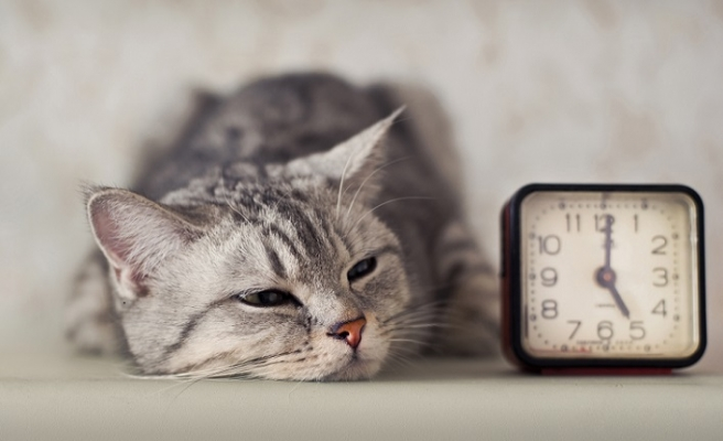 Eski(meyen) zamanlara dair: Saatler, Ruhlar ve Kediler