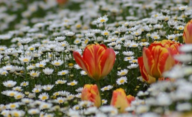 Çiçek, göze işaret fişeği gönderilmesidir