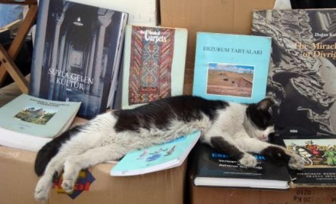 Bilge kedi çok mu yorulmuş?