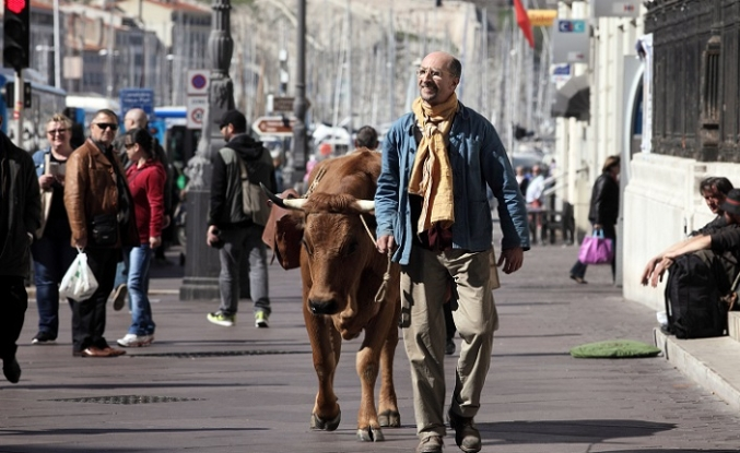 Süt sirkinde inek sağmak: La Vache filmi
